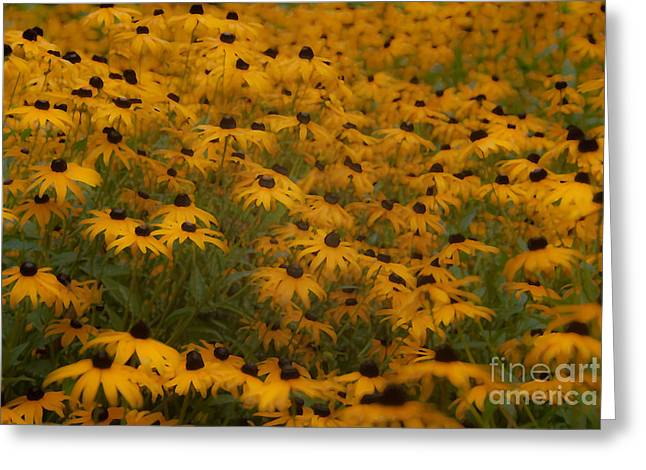 A Field Full Of Flowers Greeting Card by Michael Rucci