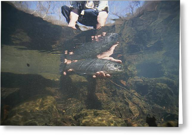 Aquatic Split Level Views Greeting Cards - A Fisherman Releases A Rainbow Trout Greeting Card by Stephen Alvarez