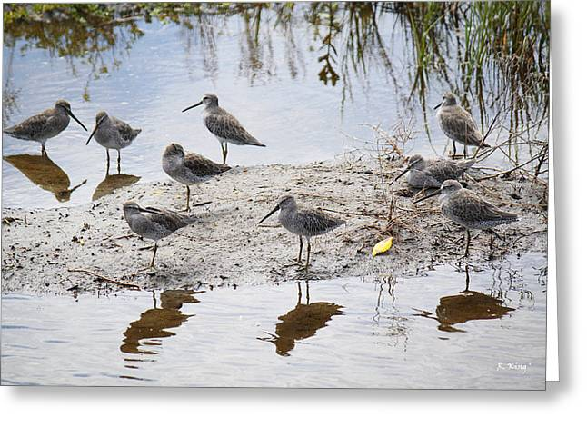 Wildlife Genre Greeting Cards - A Fling of Long Billed Dowitchers Greeting Card by Roena King