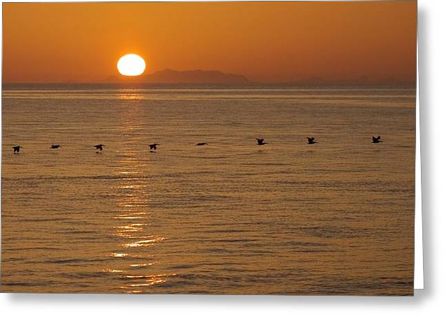 Esteban Greeting Cards - A Flock Of Brown Pelicans Flying Low Greeting Card by Ralph Lee Hopkins