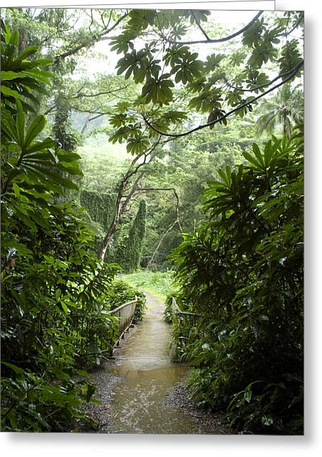Manoa Falls Greeting Cards - A Flooded Path At Manoa Falls Greeting Card by Stacy Gold