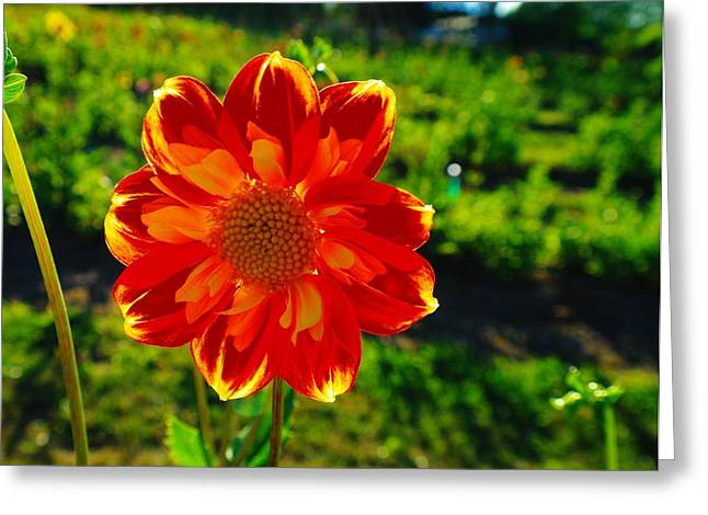 August Photos Greeting Cards - A Flowering Smile  Greeting Card by Jeff  Swan