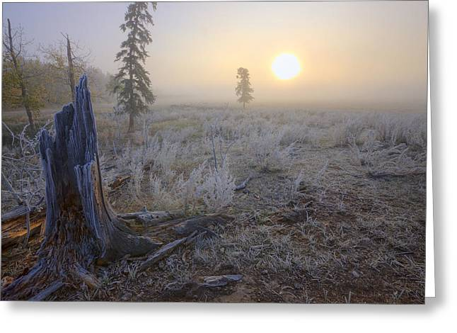 Foggy Day Greeting Cards - A Foggy Autumn Sunrise On A Hoar Frost Greeting Card by Dan Jurak
