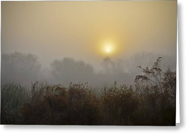 Living Life Photography Greeting Cards - A Foggy Sunrise Greeting Card by Carolyn Marshall