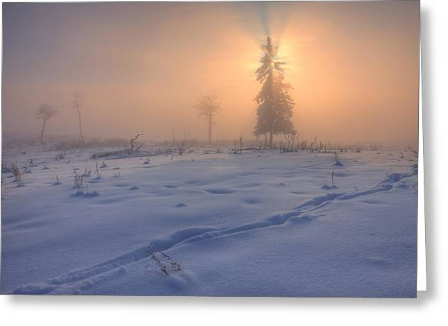 Foggy Day Greeting Cards - A Foggy Winter Sunrise With A Morning Greeting Card by Dan Jurak