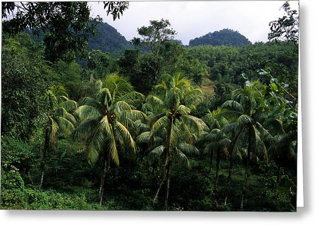 Green Foliage Greeting Cards - A Forest Scene In Jamaica Greeting Card by Stacy Gold
