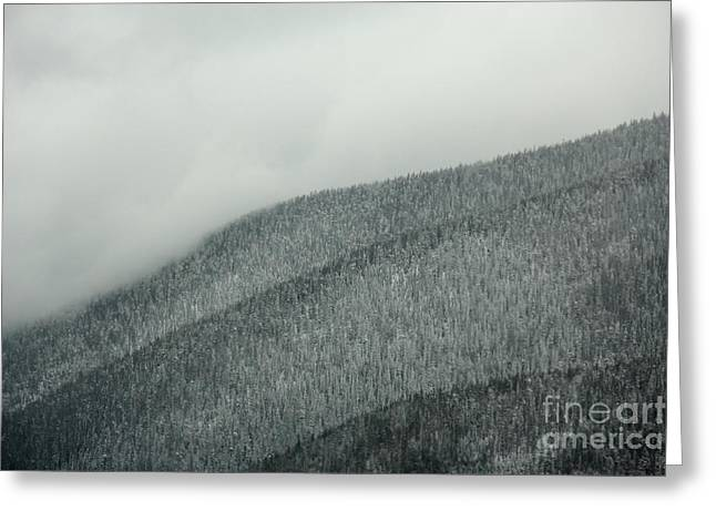 Arapaho Greeting Cards - A Forests Echo Greeting Card by Dana DiPasquale