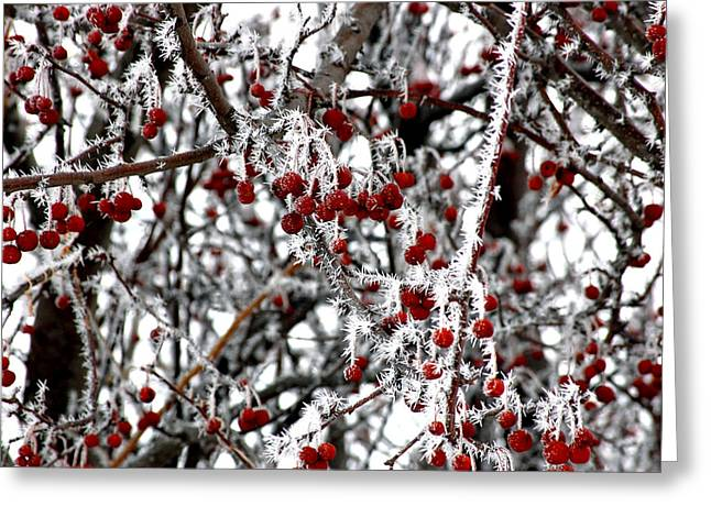 Randall Templeton Greeting Cards - A frosty morning. Greeting Card by Randall Templeton