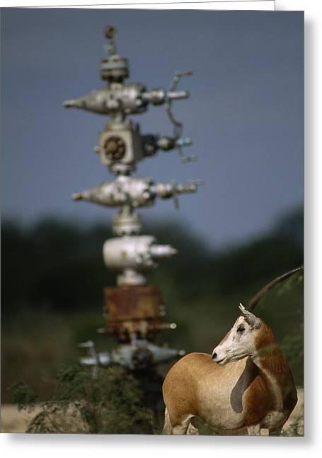 Gemsbok Greeting Cards - A Gemsbok Standing Near A Natural Gas Greeting Card by Joel Sartore