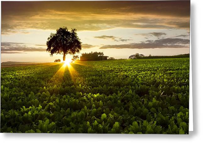 A Golden Evening  Greeting Card by Debra and Dave Vanderlaan