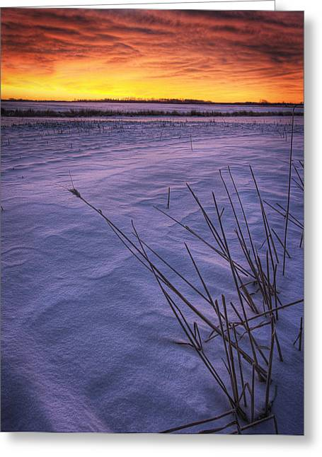 Snow Drifts Greeting Cards - A Golden Winter Sunrise Over Drifted Greeting Card by Dan Jurak