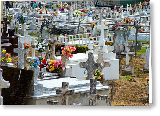 Rincon Greeting Cards - A Grave Situation  Greeting Card by Tim  Fitzwater