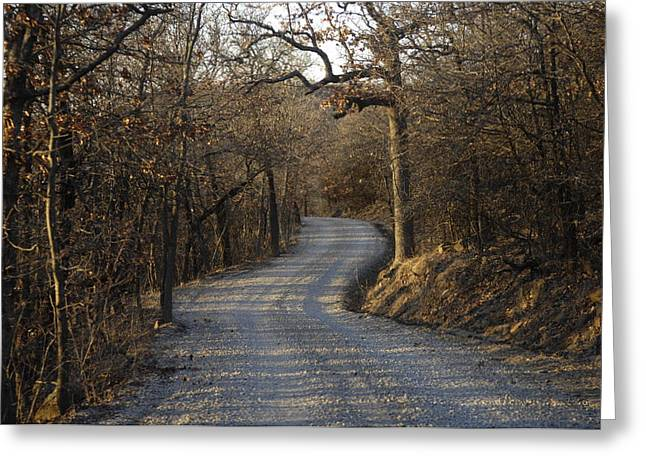 Gravel Road Greeting Cards - A Gravel Road Cuts Through A Wooded Greeting Card by Joel Sartore
