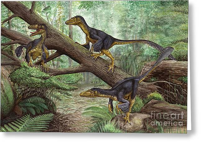 Dromaeosaurid Greeting Cards - A Group Of Balaur Bondoc Greeting Card by Sergey Krasovskiy