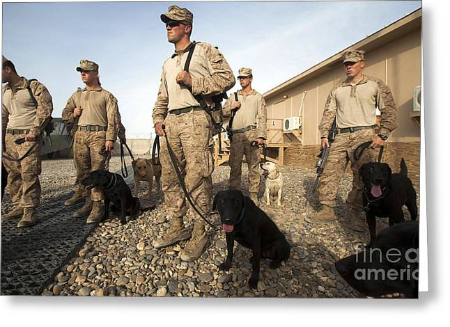 Panting Dog Greeting Cards - A Group Of Dog-handlers Conduct Greeting Card by Stocktrek Images