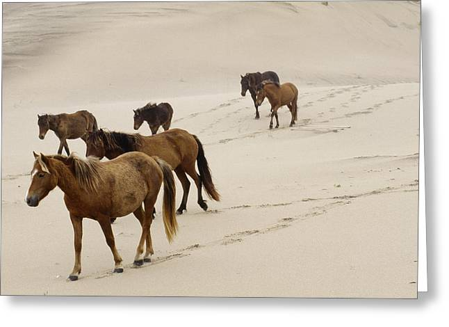 Animal Tracks Greeting Cards - A Group Of Wild Horses In The Dunes Greeting Card by Justin Guariglia