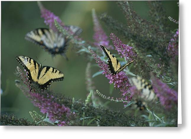 Garden Scene Photographs Greeting Cards - A group of yellow Greeting Card by Taylor S. Kennedy