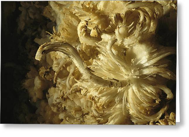 Geological Formations Greeting Cards - A Gypsum Cave Formation Called  Flower Greeting Card by Stephen Alvarez