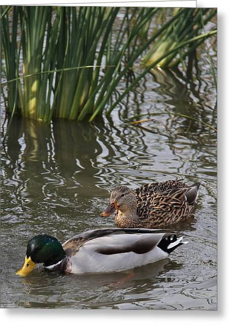 Downtown Franklin Greeting Cards - A handsome couple Greeting Card by Frank Wickham