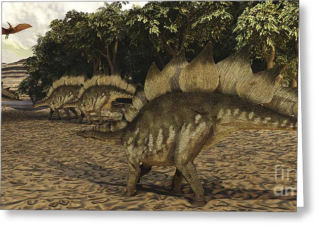 Stegosaurus Digital Greeting Cards - A Herd Of Stegosaurus Walk Down A Muddy Greeting Card by Corey Ford