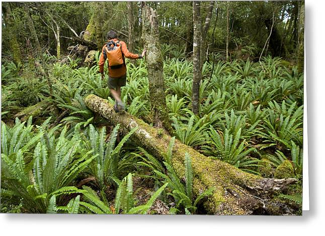 Only Mid Adult Men Greeting Cards - A Hiker Explores The Forest And Ferns Greeting Card by Bill Hatcher