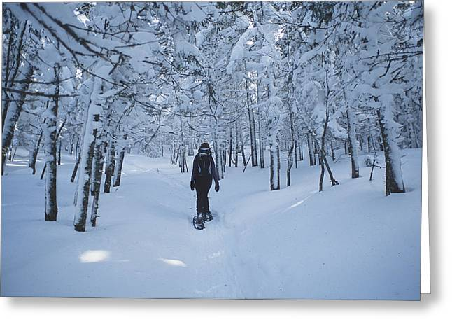 Forests And Forestry Greeting Cards - A Hiker Passes Through A Snowy Forest Greeting Card by Bill Curtsinger