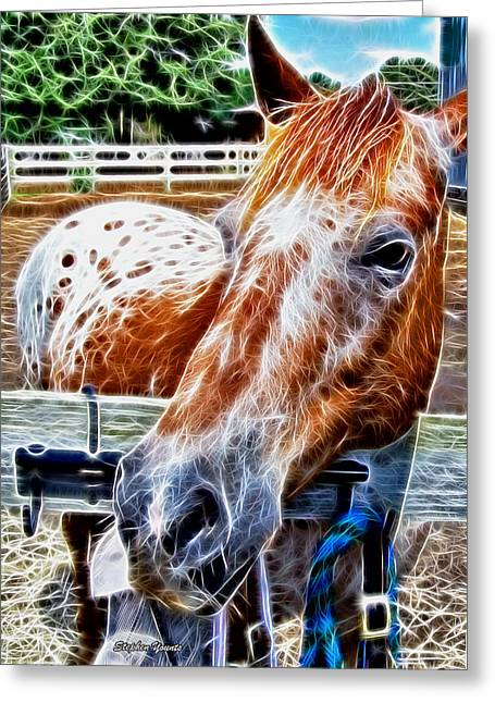 Yearling Horse Greeting Cards - A Horse of Course Greeting Card by Stephen Younts