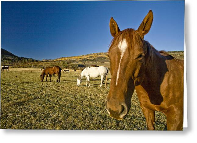Dude Ranch Greeting Cards - A Horse Stands In A Field On A Summer Greeting Card by Richard Nowitz