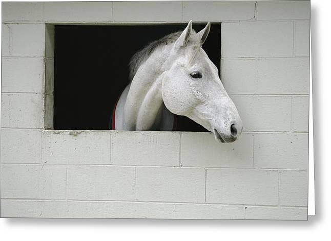 Middleton Greeting Cards - A Horse Sticks His Head Out Of A Window Greeting Card by Michael Melford