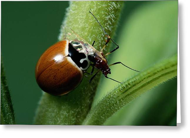 Spotless Greeting Cards - A Ladybug Eats An Aphid Greeting Card by George Grall
