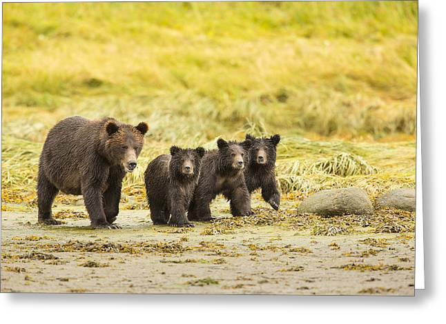Prints Of Alaska Greeting Cards - A Large Family Greeting Card by Tim Grams