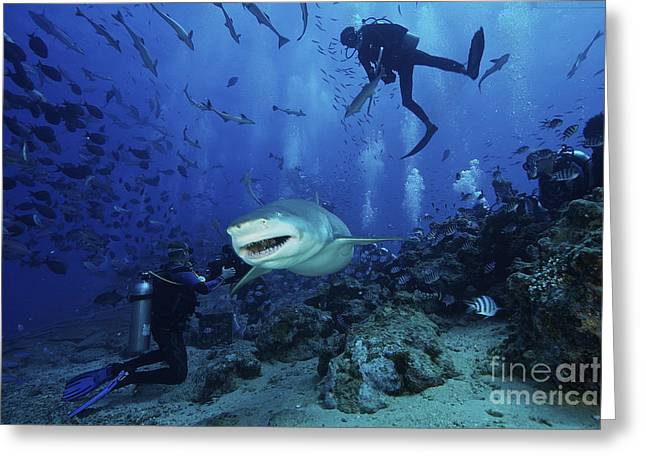 Oxygen Tank Greeting Cards - A Large Lemon Shark Gulps Down A Large Greeting Card by Terry Moore