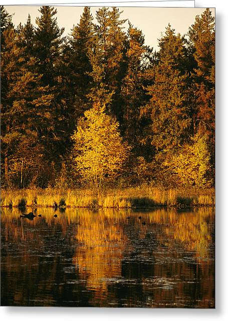 Park Scene Greeting Cards - A Late Afternoon View Of A Lakeside Greeting Card by Raymond Gehman