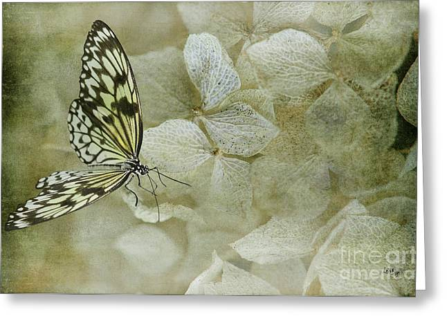 Butterfly On Flower Greeting Cards - A Lighter Touch Greeting Card by Lois Bryan
