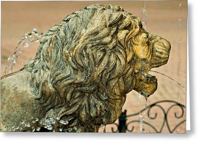 Cool Lion Greeting Cards - A Lion in Summer Greeting Card by Steve Harrington