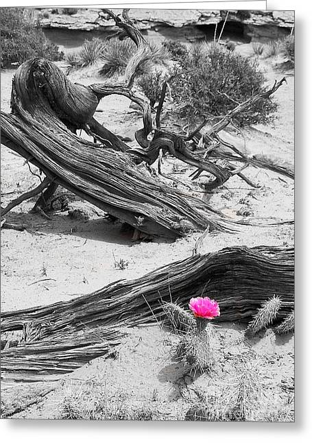 Southern Utah Greeting Cards - A Little Bit of Pink Greeting Card by Bob and Nancy Kendrick