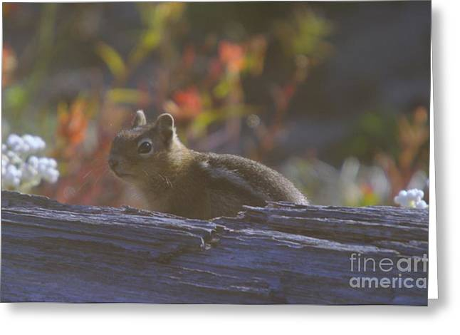 Little Critters Greeting Cards - A Little Chipmunk  Greeting Card by Jeff  Swan