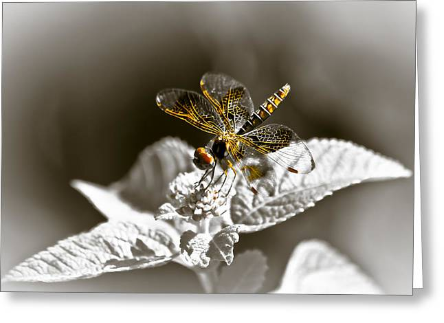 Dragon Fly Photo Greeting Cards - A Little Color Greeting Card by Carolyn Marshall