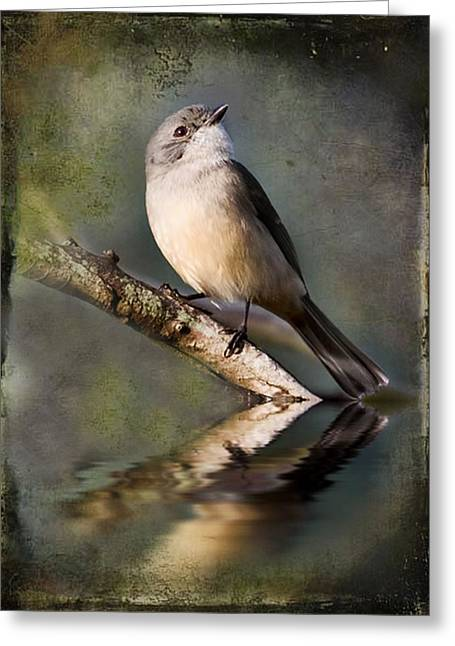 Alcoa Greeting Cards - A Little Darling Greeting Card by Kym Clarke
