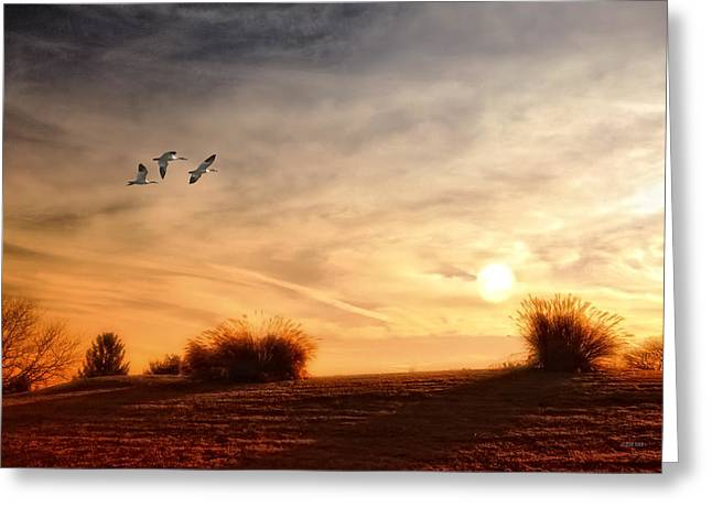 A LITTLE PEACE Greeting Card by Tom York Images