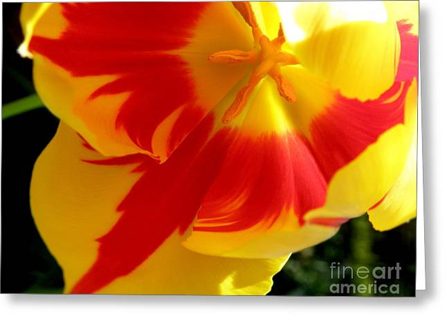 Lainie Wrightson Greeting Cards - A Little Ray of Sunshine Greeting Card by Lainie Wrightson