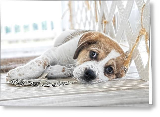 Puppies Print Greeting Cards - A Little Rest Greeting Card by Tilly Williams