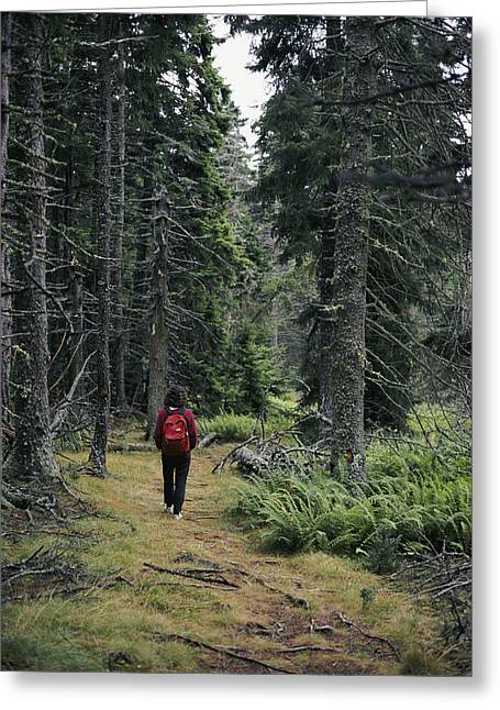 Haut Greeting Cards - A Lone Hiker Enjoys A Wooded Trail Greeting Card by Tim Laman