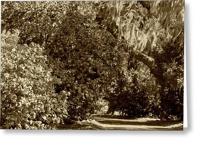 A Lowcountry Springtime Greeting Card by Suzanne Gaff