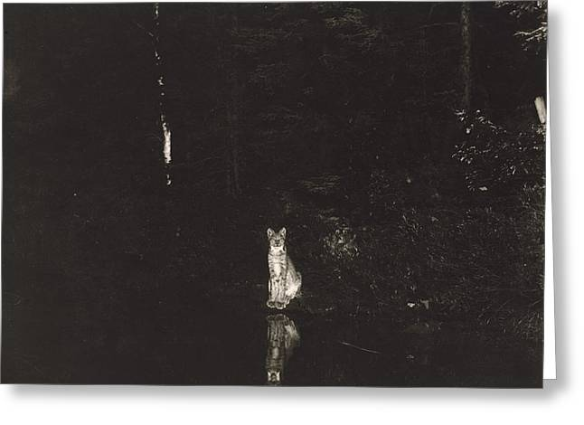 Canadian Lynx Greeting Cards - A Lynx Photographed At Night Greeting Card by George Shiras