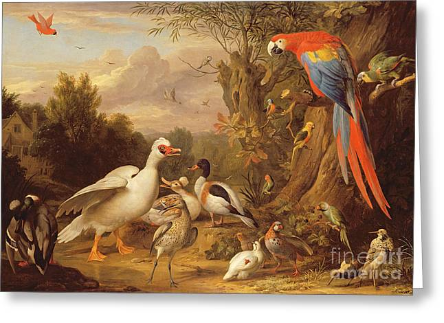 A Macaw - Ducks - Parrots And Other Birds In A Landscape Greeting Card by Jakob Bogdani
