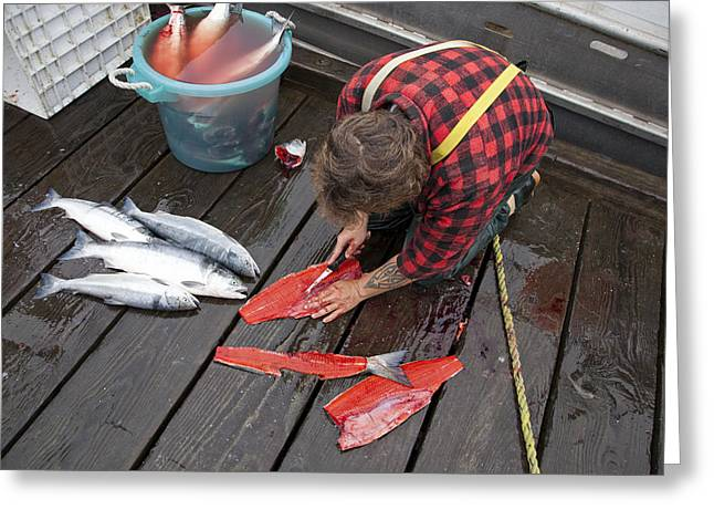 Red Meat Greeting Cards - A Man Cleans A Sockeye Salmon Greeting Card by Taylor S. Kennedy