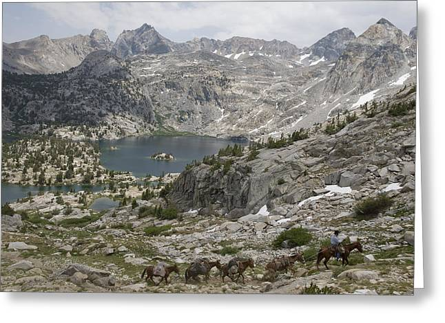 Kings Canyon National Park Greeting Cards - A Man Leading Horses Through Kings Greeting Card by Joel Sartore