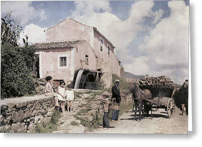 Horse And Cart Greeting Cards - A Man Transports Wood In Terceira Greeting Card by Wilhelm Tobien