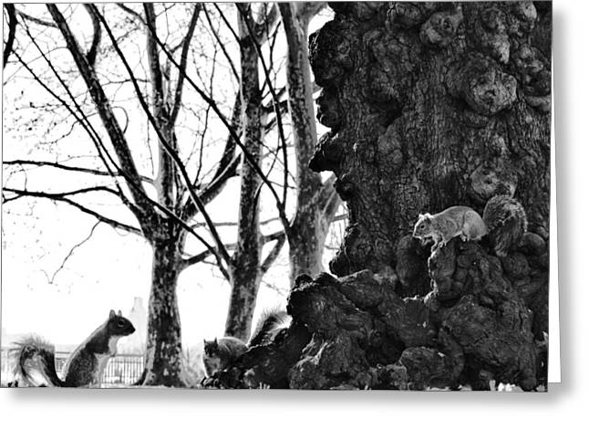 Treaty Greeting Cards - A Meeting of Squirrels Greeting Card by Bill Cannon